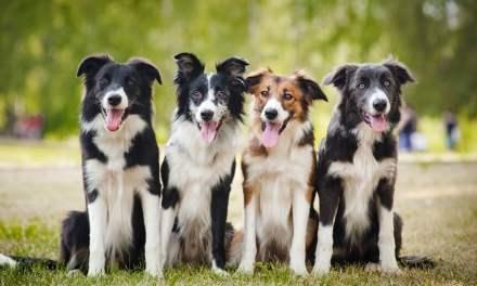 Os 400 nomes de cachorro mais populares do Brasil!