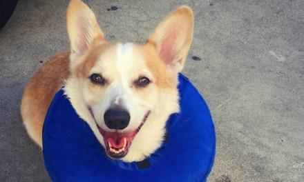 19 cães com ótimos motivos para sorrir