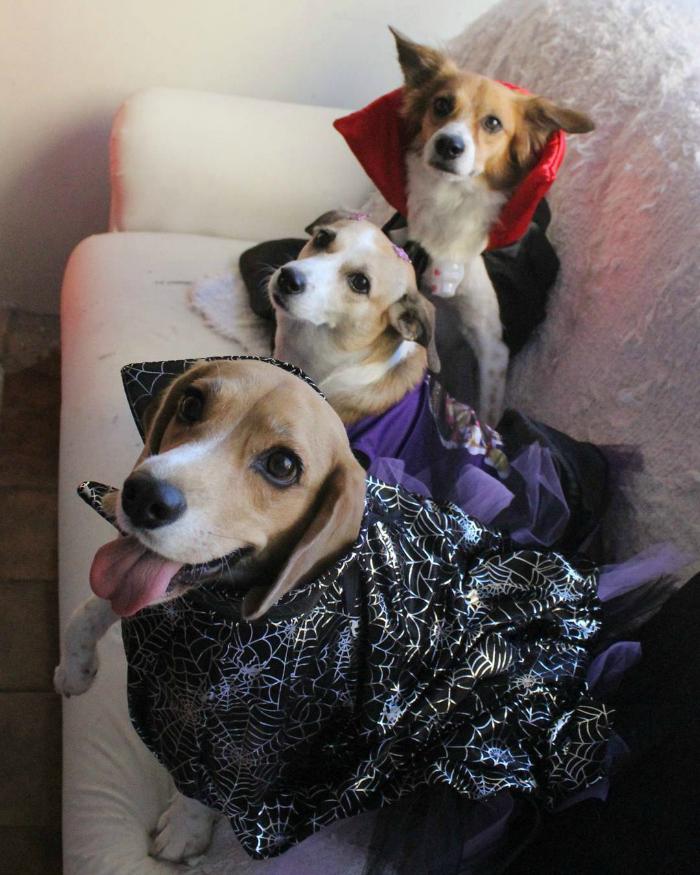 bebethe_beagle-fantasias-doghero