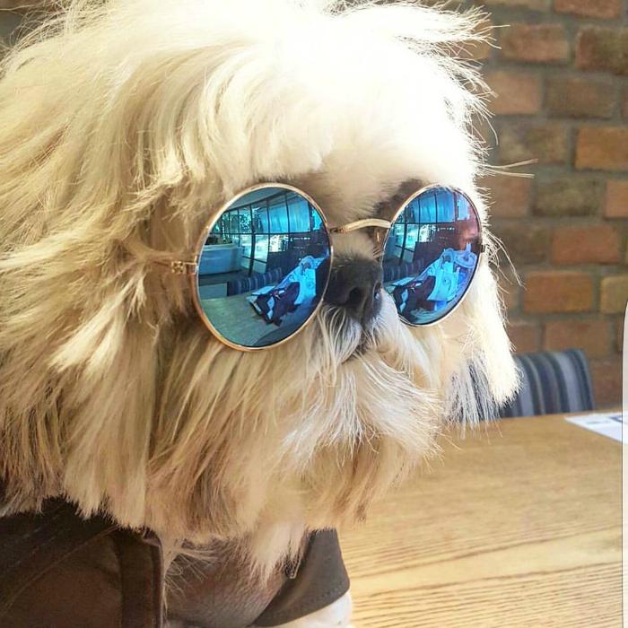 dogflavinho-fantasias-doghero
