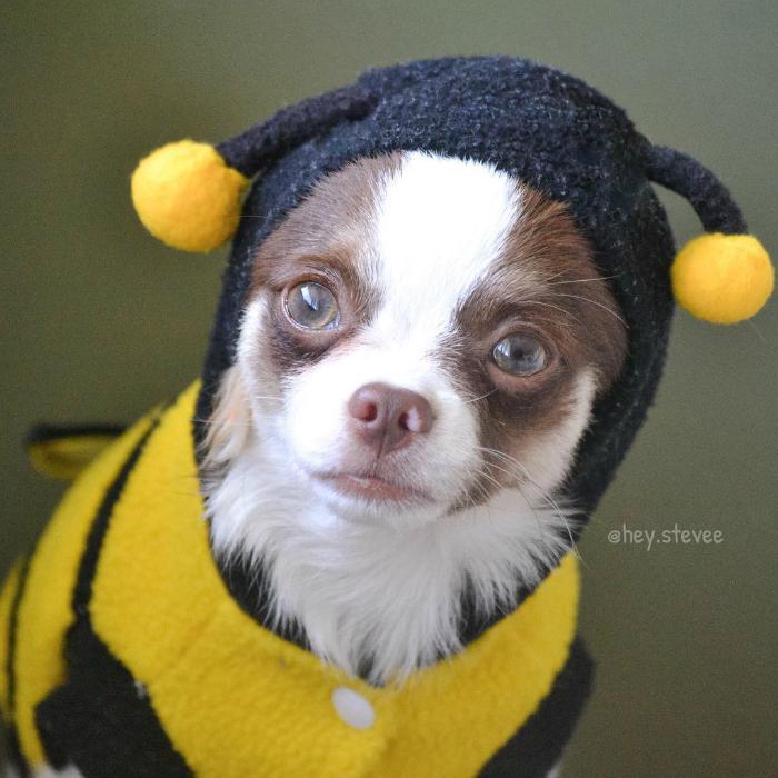 hey-stevee-fantasias-doghero