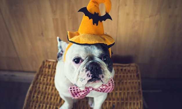 16 cachorros que estão prontos para o Halloween