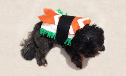Halloween: aprenda a fazer uma fantasia de sushi para cachorro