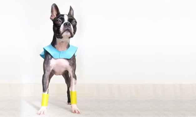 Halloween: crie uma fantasia de super-herói para cachorro em 15 minutos