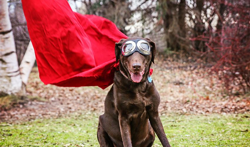 DogHero é selecionada para programa global do Google