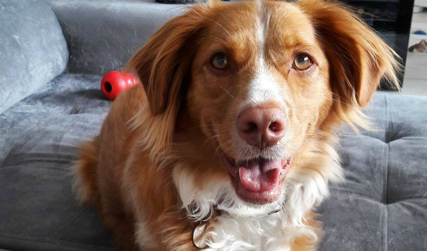 Quero ser it-dog: 4 dicas para bombar o perfil do seu cachorro