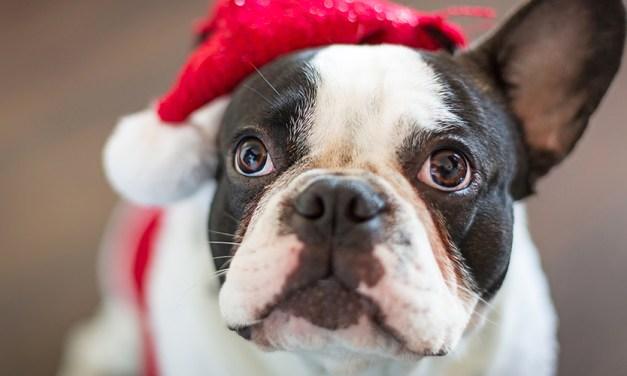 19 cachorros que não veem a hora do Papai Noel chegar!