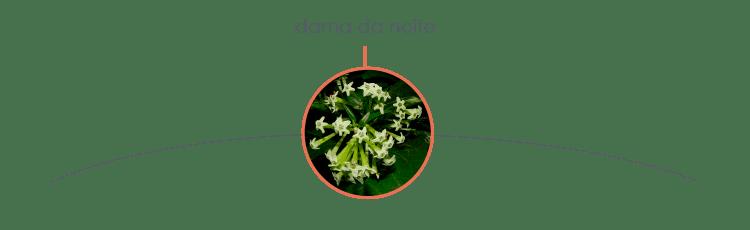 plantas-toxicas-para-caes-6
