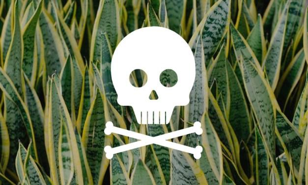 Plantas tóxicas para cães: veja quais são elas