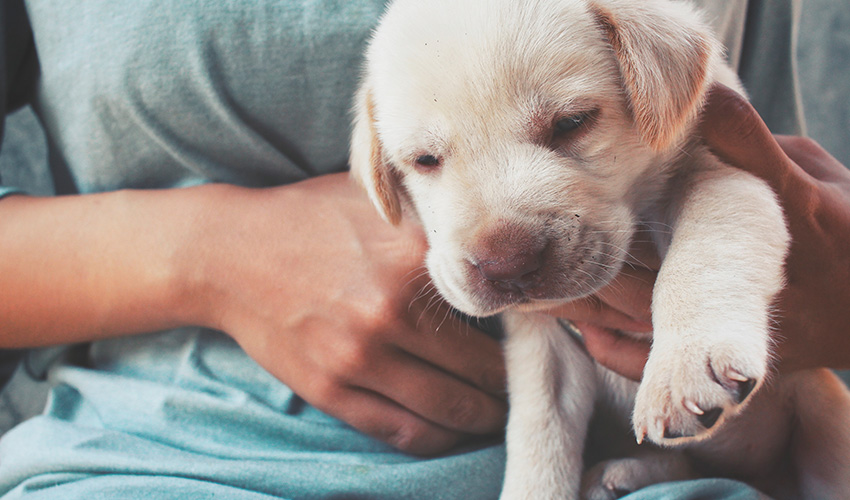 Vacina de cachorro: tire suas dúvidas