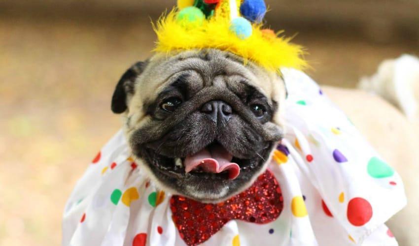 Concurso de fantasias de Carnaval: os 10 it-dogs campeões