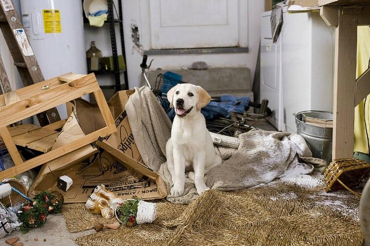 filmes-de-cachorro-9