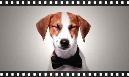12 filmes obrigatórios para quem é apaixonado por cachorro