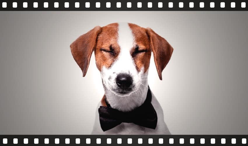 12 filmes de cachorro obrigatórios para quem ama animais