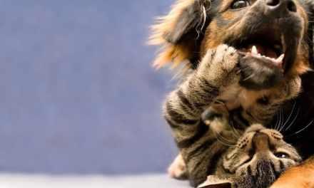 Filtros de busca: gatos e cachorros não castrados