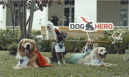Cães heróis da Liga DogHero visitam asilo em Porto Alegre