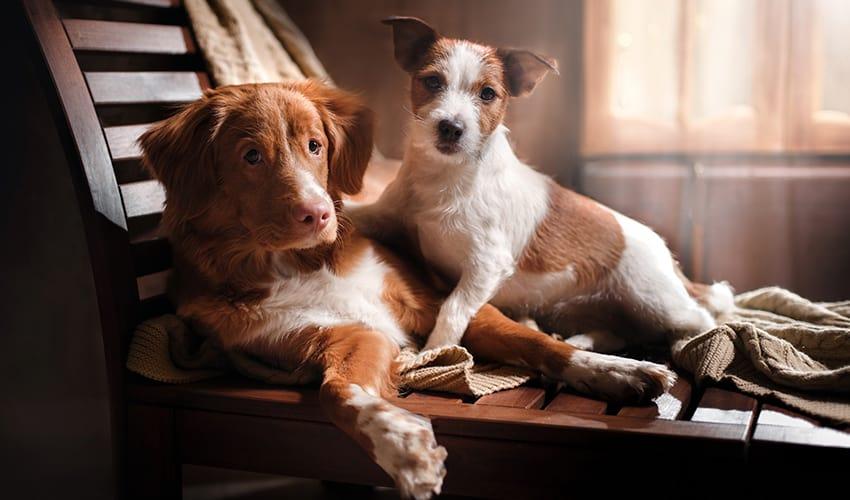 Briga entre cães: 7 dicas para reconciliar os peludos