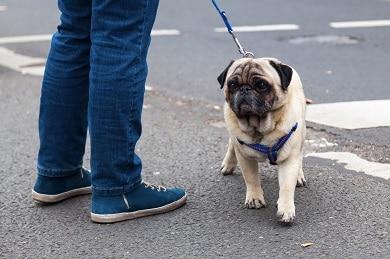 Todos os cães que se hospedam na DogHero têm acesso à garantia veterinária