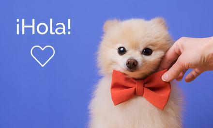 DogHero chega à Argentina