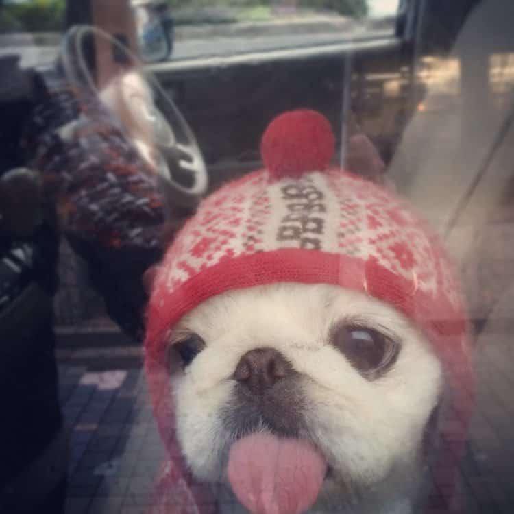 Os melhores looks caninos do Inverno 2017 - DogHero for dog lovers <3