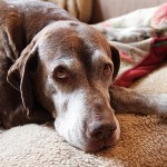 Mi perro vomitó: conocé por qué y cuándo preocuparte