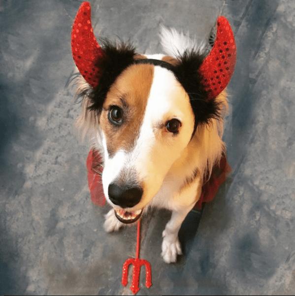 Halloween animal: 10 fotos de cachorros que já entraram no clima!