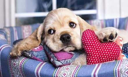 Hospedar o cachorro com parentes e amigos: vale a pena?