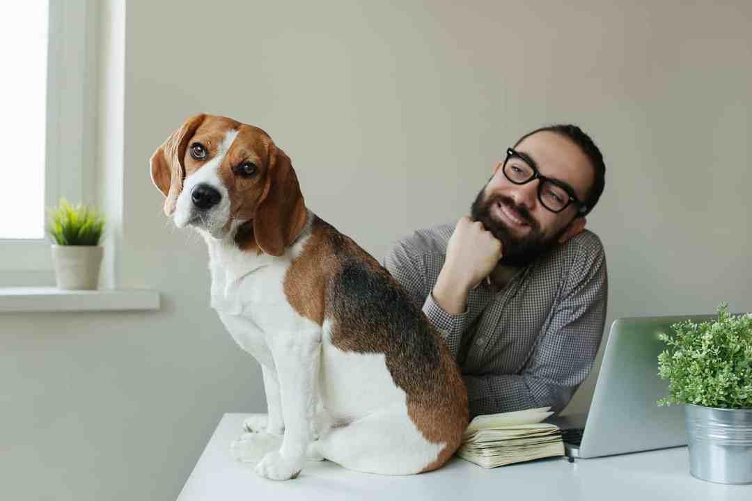 Mas fique atento, pois esse cachorro tem tendência a obesidade