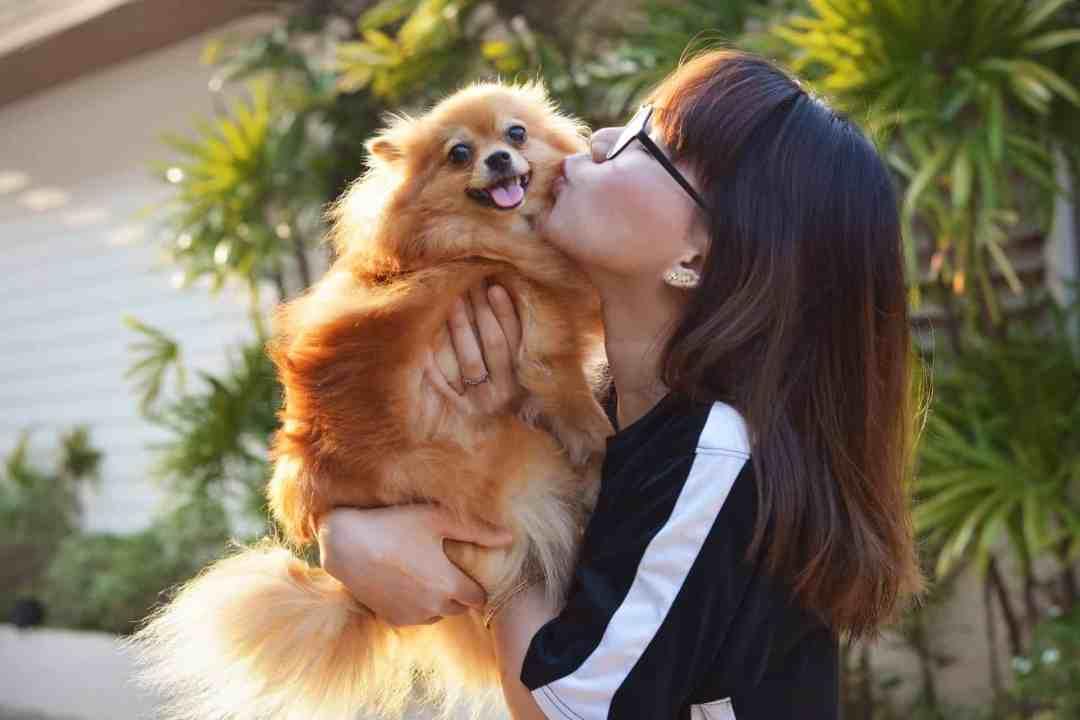 Por seu tamanho reduzido, esse cachorro é perfeito para quem vive em espaços pequenos