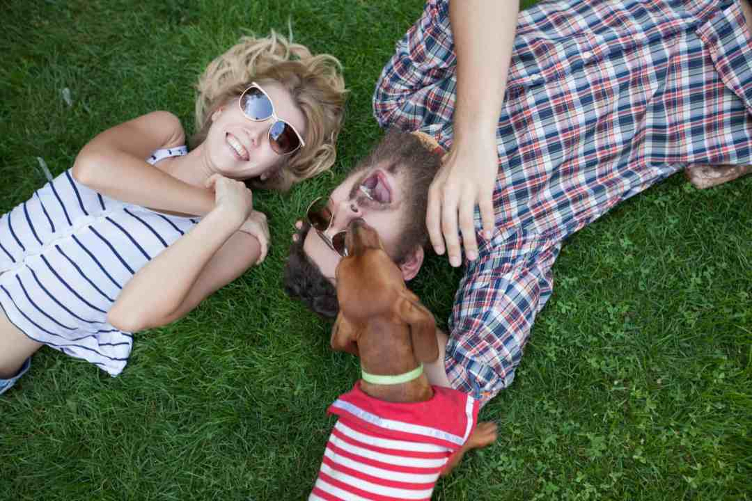 A raça ama estar com a família e é uma ótima companhia