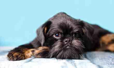 Cachorro vomitando amarelo: o que fazer?
