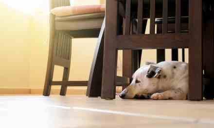 Cachorro vomitando espuma branca: o que fazer?