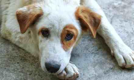 Cachorro urinando sangue: o que fazer?