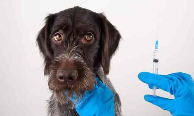 Raiva canina: o que é, sintomas e tratamento