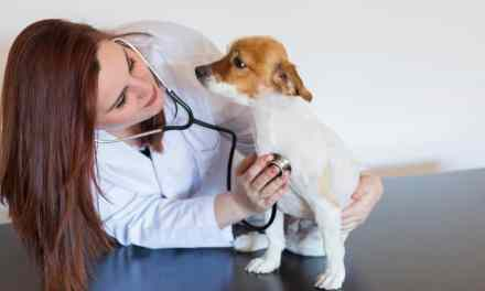 Tumor em cachorro: o que é, sintomas e tratamento
