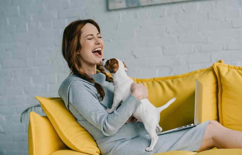 Quiz de cachorro para o Instagram Stories