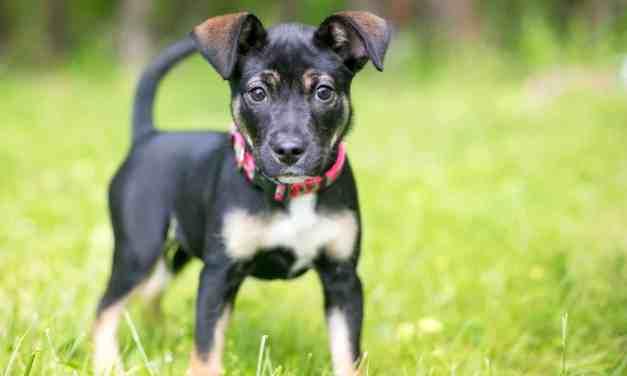 Adoção de cachorro: tudo sobre o antes e depois de adotar um pet