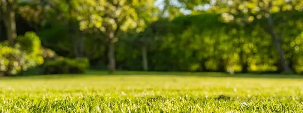 Best Lawn Treatment For Year Round Care House Method