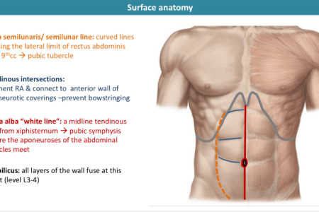 Surface anatomy of abdomen 4k pictures 4k pictures full hq instant anatomy abdomen surface abdominal wall medicine instant anatomy abdomen surface abdominal wall video surface anatomy of the abdomen and the lower ccuart Choice Image