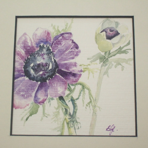 Anemone Botanical Print - Oakapple & Rose