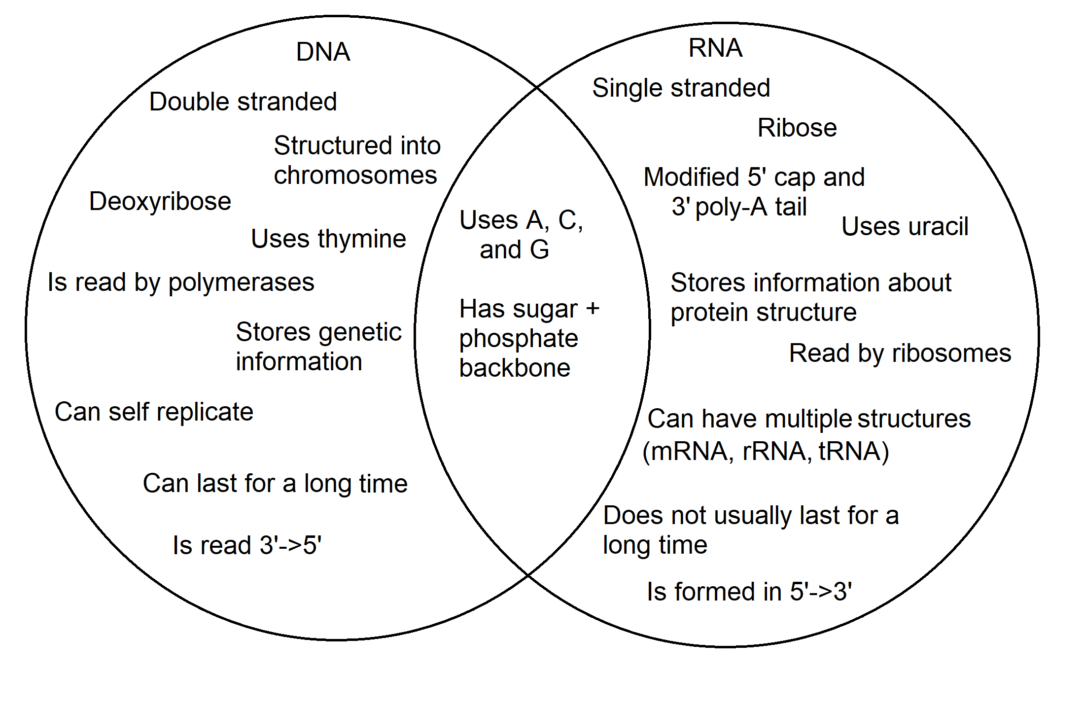 Dna Vs Rna Differences Amp Similarities