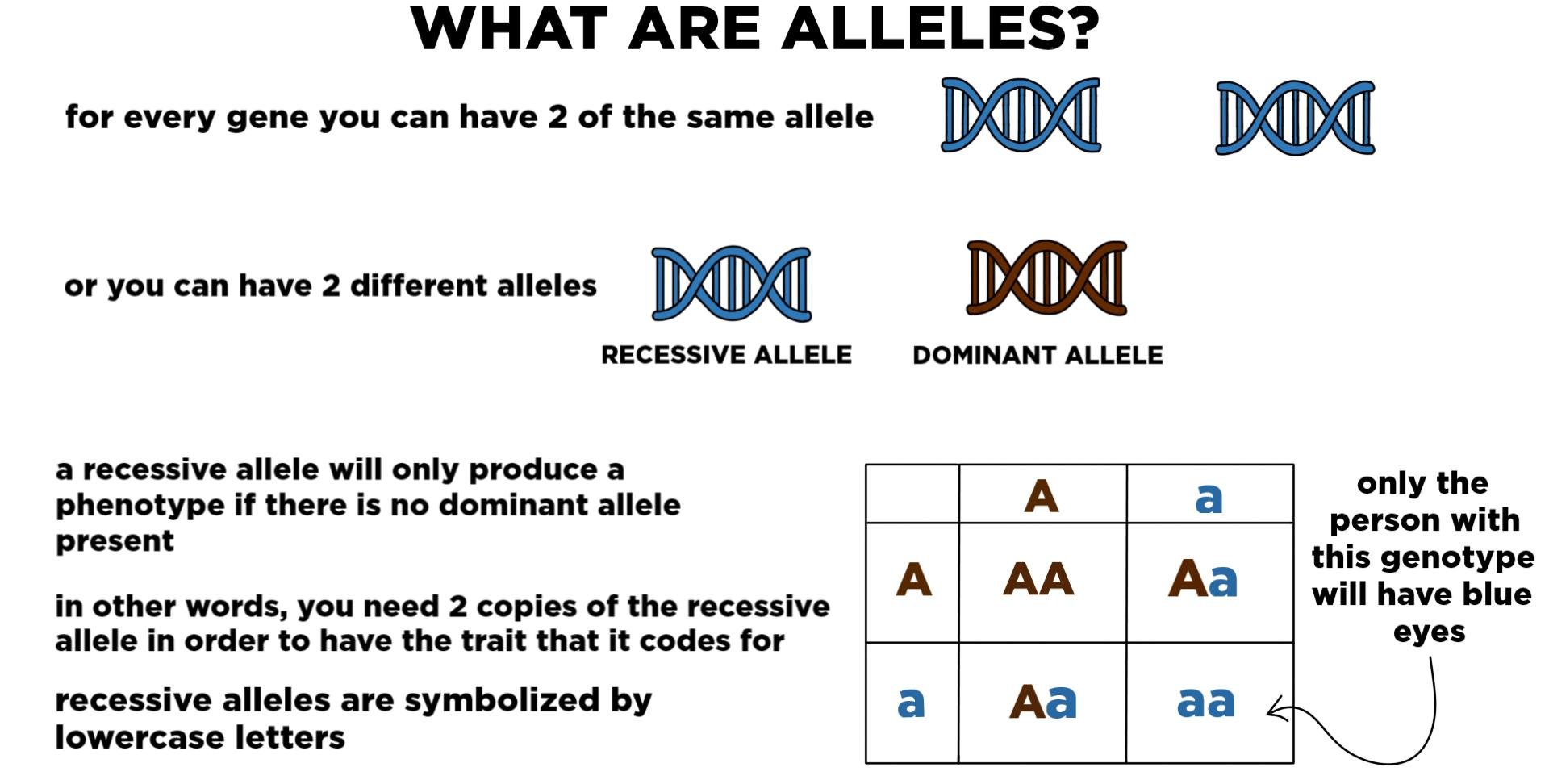 Recessive Genetics Alleles Genes Amp Traits