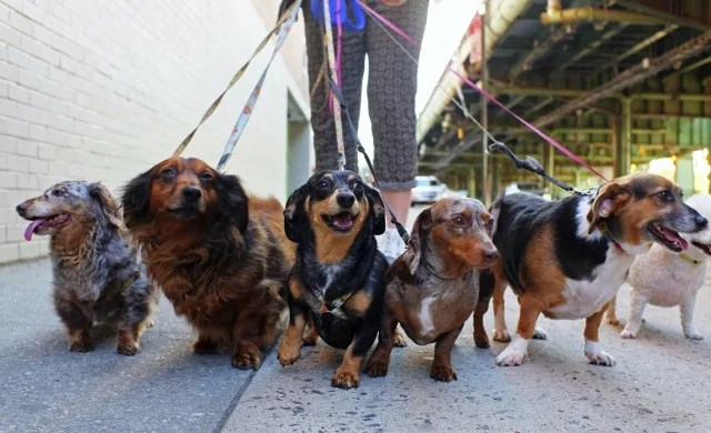 How to start a dog walking business: 4 simple steps | Startups