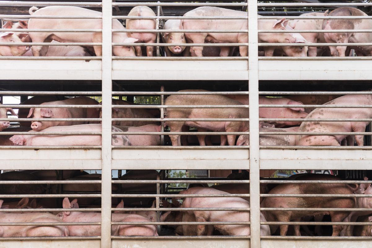 Why It's Time to End Factory Farming