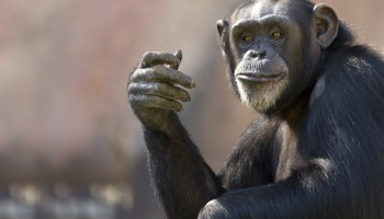 What Explains the Resistance to Evolutionary Psychology