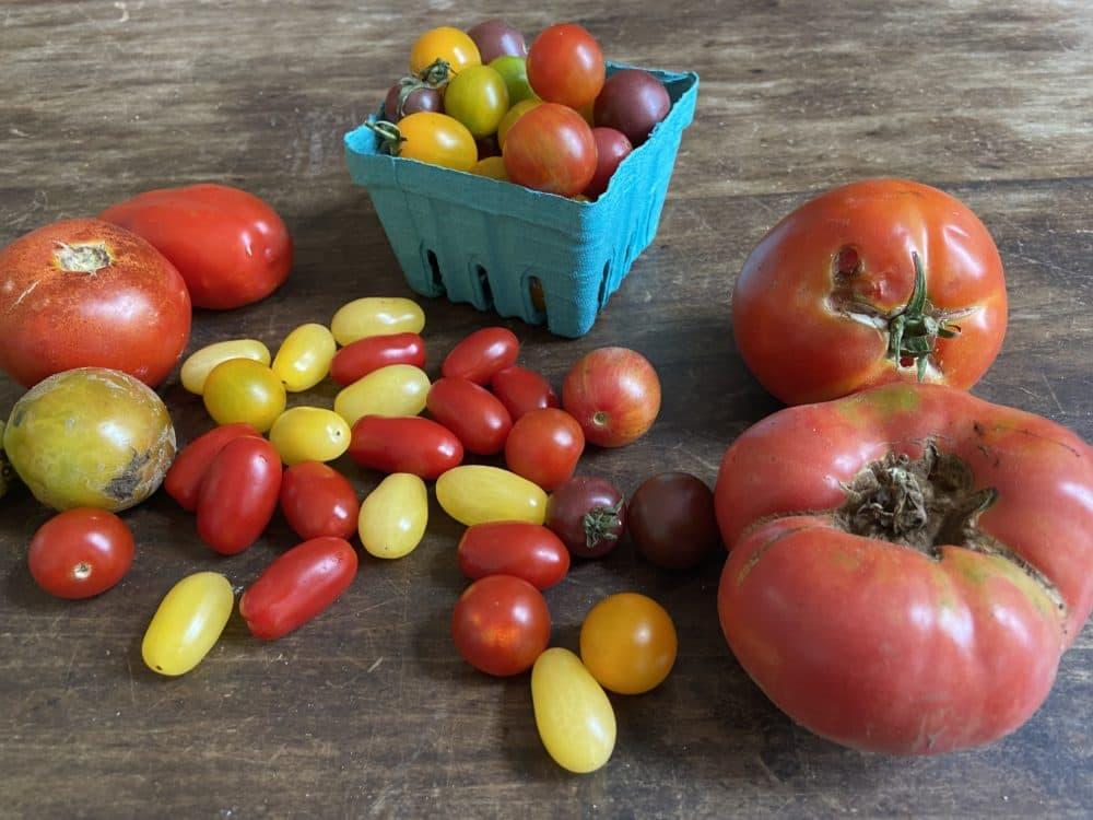 An assortment of tomatoes (Kathy Gunst)