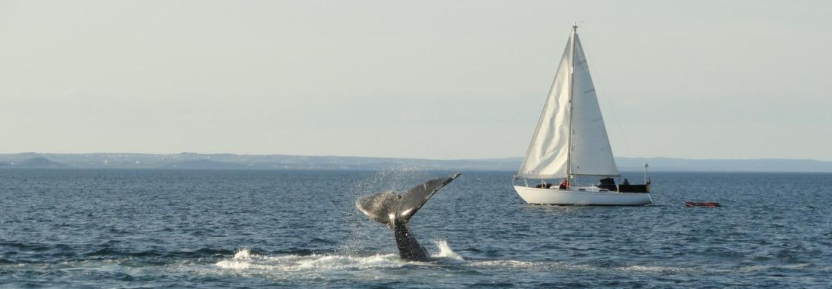 Watching Whales from Sea and Shore in Witless Bay, Newfoundland