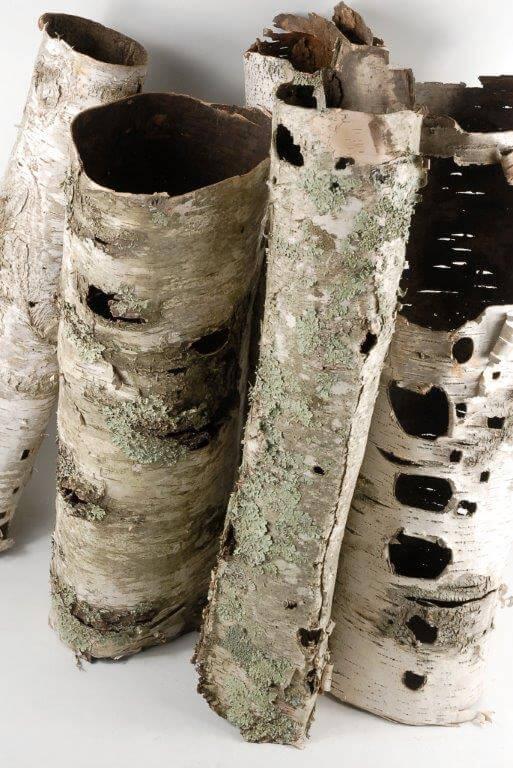 Natural Birch Bark Tubes 6 X 1575