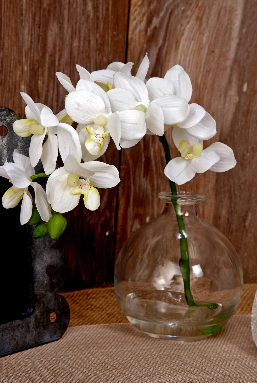 10 Phalaenopsis Orchid In Glass Vase Cream