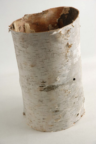 Natural Birch Bark Tubes 7 10in